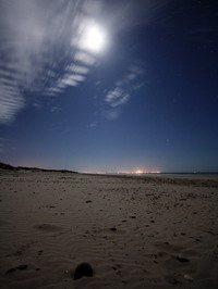 The beach under the moonlight