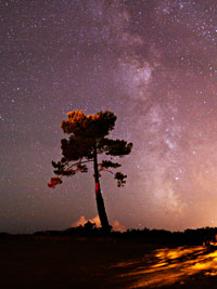 The Milky Way and the pine